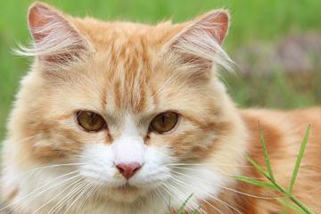 cat-10
