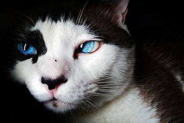 cat-15