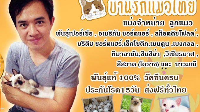 buy cat