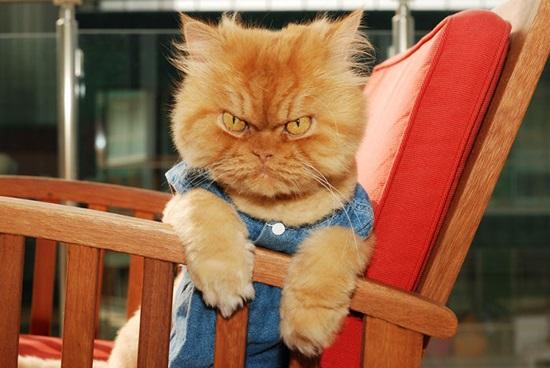 Cat Gafupicc