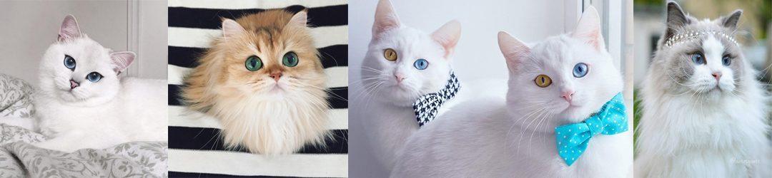 ประวัติแมวไทยสีสวาด แมวเปอร์เซีย และแมวพันธุ์อื่น ทั่วโลก